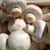 دانلود پروژه کارآفرینی پرورش قارچ خوراكی