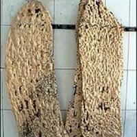 دانلود رایگان تحقیق بررسی علل و میزان ضایعات آرد و نان های مختلف