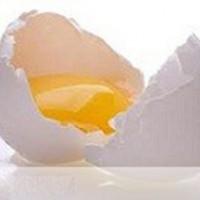 دانلود کارآفرینی تولید پودر تخم مرغ