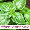 طرح جابر کلاس سوم ابتدایی با موضوع گیاهان