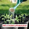 طرح جابر پایه چهارم ابتدایی با موضوع جذب آب در گیاهان