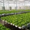 گزارش کارآموزی رشته گیاه پزشکی بیماری های گیاهی