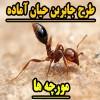 طرح جابر درباره مورچه ها