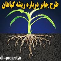طرح جابر درباره ریشه گیاهان