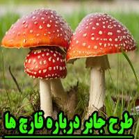 طرح جابر با موضوع قارچ ها