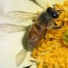 دانلود پروژه کارآفرینی بسته بندی عسل