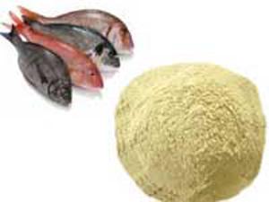 پروژه کارآفرینی کارگاه تولید پودر ماهی