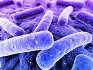 دانلود رایگان مقاله پیرامون عفونت ها و انواع آنها