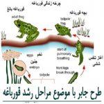 طرح جابر با موضوع مراحل رشد قورباغه