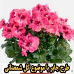 طرح جابر با موضوع گل شمعدانی