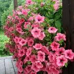 دانلود پروژه کارآفرینی پرورش گل و گياهان زينتی