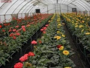 دانلود رایگان پروژه کارآفرینی پرورش گل و گياه در گلخانه